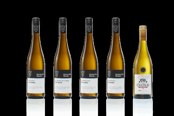 Gutedel-Weinprobe